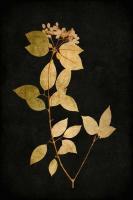 Golden Nature VI #KTB111633