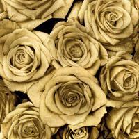 Gold Roses #KTB113446