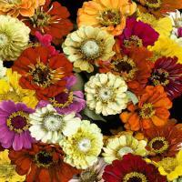 Floral Abundance I #KTB115114