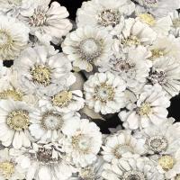 Floral Abundance in Ivory #KTB115120