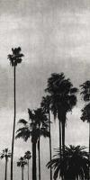 Palm Silhouette on Silver II #KTB115122