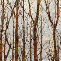Through The Trees I #KWB111788