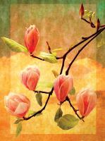 Magnolia Blossoms #72460