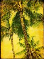 Palm Series III #76437