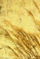 Grass Series I #76595