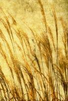 Grass Series II #76596