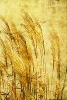Grass Series III #76597