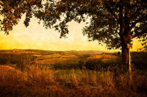 Fields of Tuscany #78811