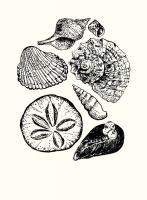 Shells 2 #92445