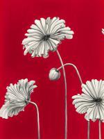 in Bloom C - Recolor #102823