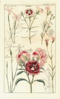 Geraniaceae 1 #81424