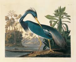Louisiana Heron Plate 217 #81460