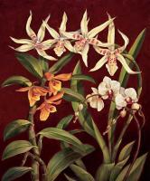 Orchid Trio I #RDI4132