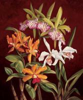 Orchid Trio II #RDI4133