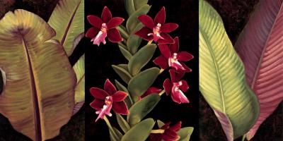 Red Orchids and Palm Leaves #RDI4152