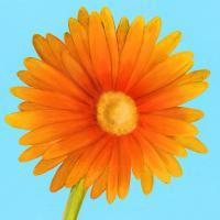 Flower Art 1 #91728