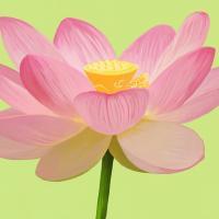 Flower Art 3 #91730