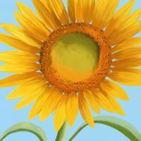 Flower Art 6 #91733