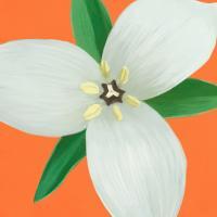 Flower Art 7 #91734