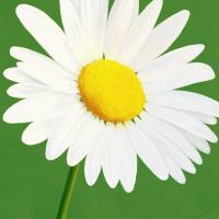 Flower Art 8 #91735