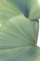 Contemporary Palm Leaves 3 #99511