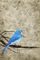 Blue Bird #100389