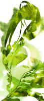 Watercolor Botanicals 1 #102208