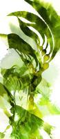 Watercolor Botanicals 2 #102209
