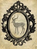 Framed Gazelle #89753