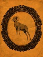 Framed Bighorn Sheep in Tangerine #89810