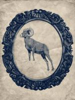 Framed Bighorn Sheep in Navy #89831