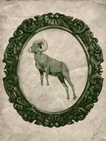Framed Bighorn Sheep in Evergreen #89832