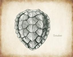 Testudines Shell B #99113