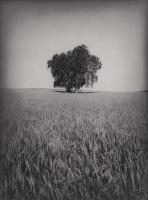 Grain Field #86856