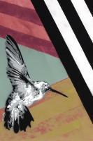 Hummingbird - Recolor #102842