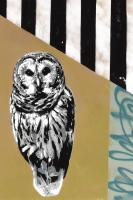 Barred Owl - Recolor #102845