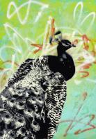 Peacock #91013
