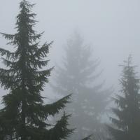 Foggy Morning 1 #90838