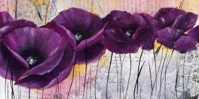 Pavot violet I #IG 3993