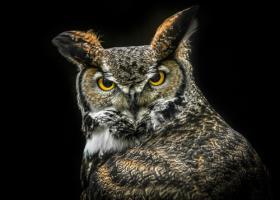 Wisdom Owl #IG 9178